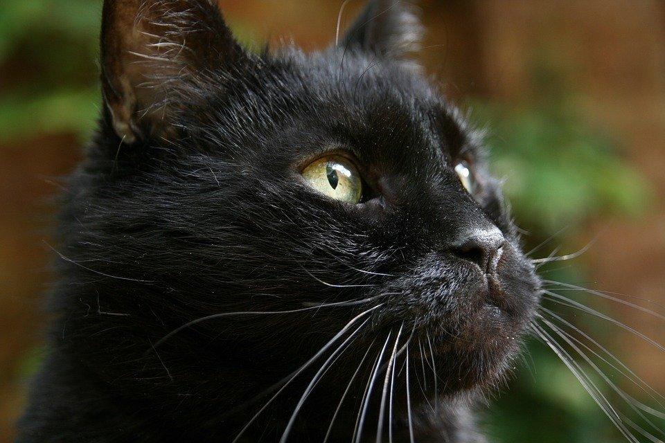 Il gatto della Befana