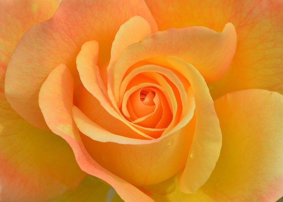 flower-3063414_960_720.jpg