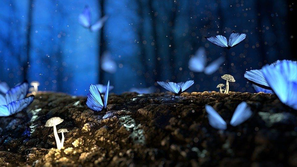 Farfalle in volo