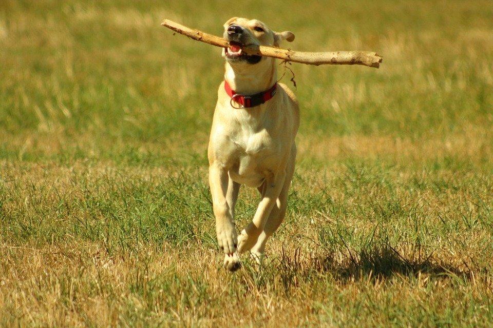 cane che gioca felice
