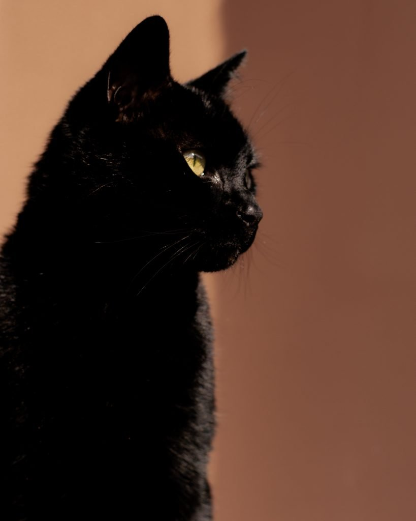 La bellezza del gatto nero