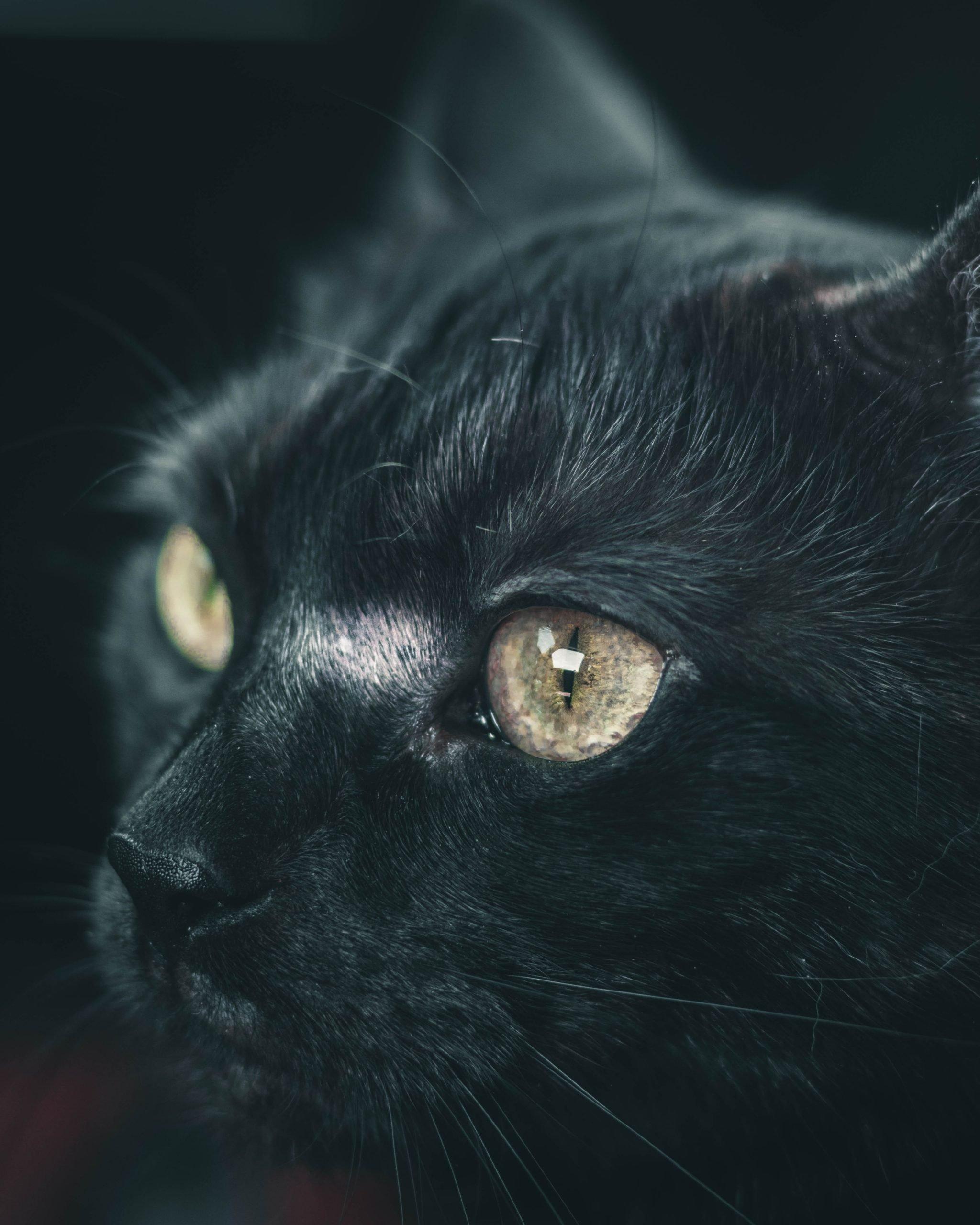 Storie di gatti neri: la gabbianella e il gatto che le insegnò a volare.