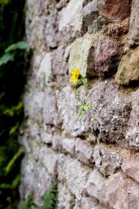 un esempio di resilienza dal mondo della natura