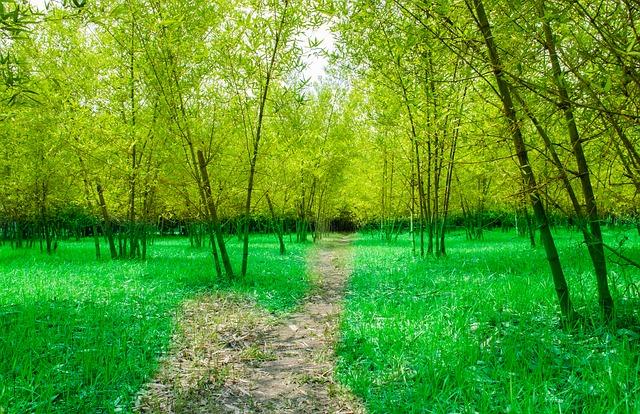 Strada tra i bamboo