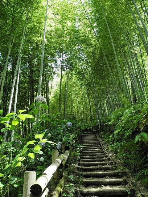Piante di bamboo
